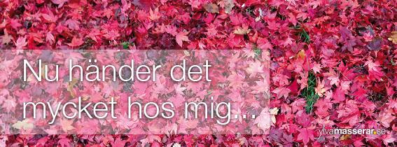 Header_november